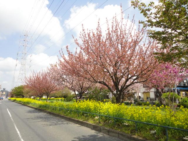 公園:江北北部緑道公園 583m