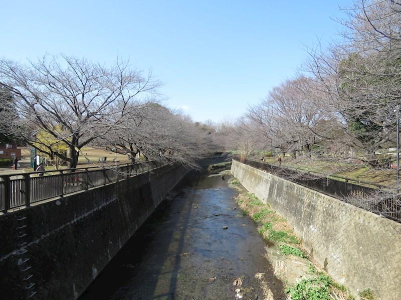 周辺環境(春には桜並木の仙川)