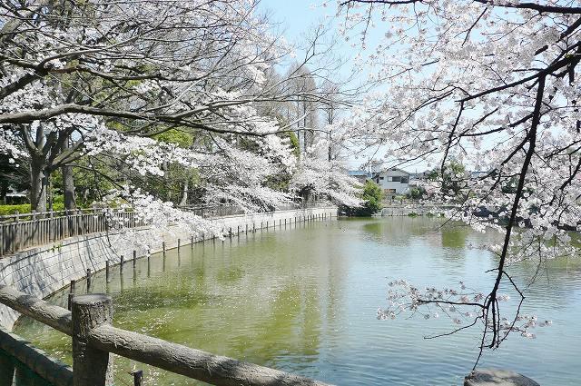 公園:碑文谷公園 500m