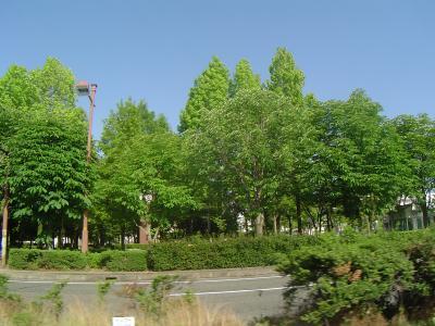 公園:中央公園 400m 近隣