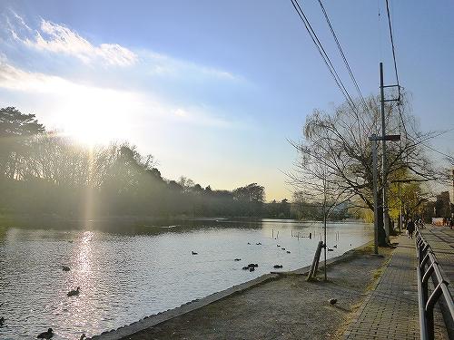 公園:都立石神井公園 919m