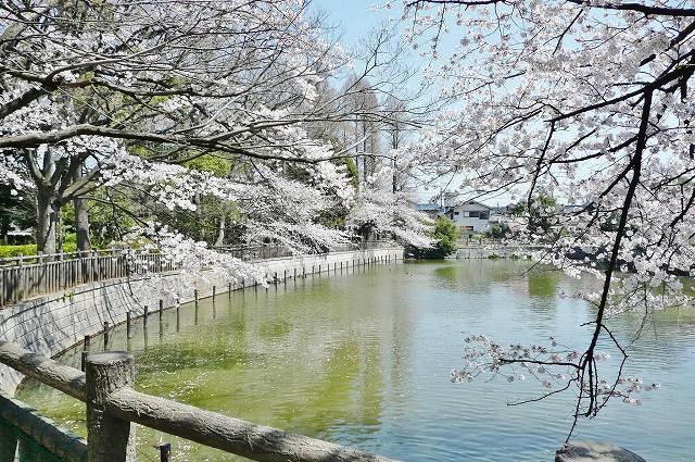 公園:碑文谷公園 200m