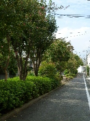 その他:呑川柿の木坂支流緑道 80m