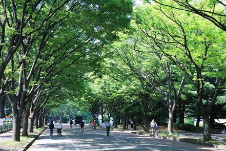 公園:都立駒沢公園 982m