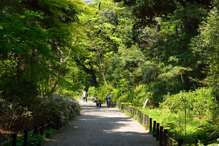 公園:国立科学博物館附属自然教育園 750m