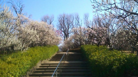 公園:羽根木公園 1254m